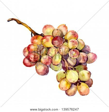 Red and yellow grape fruit - watercolor illustration