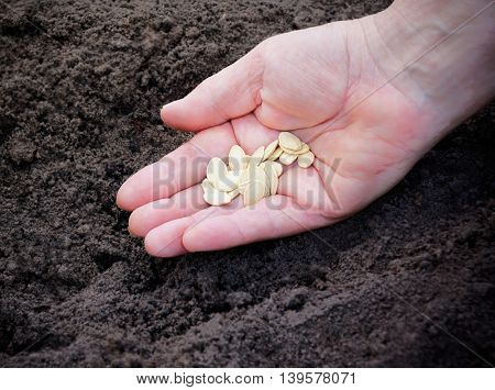 Close up image of woman hand with seeds