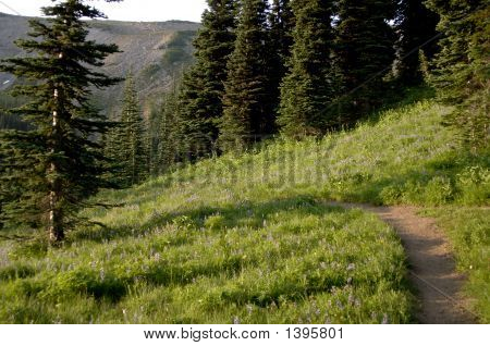 Mountain Trail With Wild Flowers On Mt Rainier