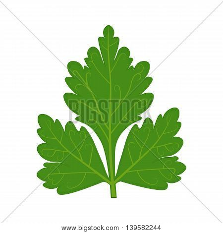 Parsley leaf vector illustration isolated on a white background