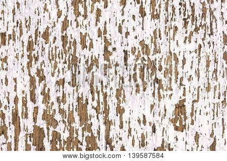 Old scratched white wooden texture. Vintage white wood background