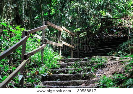 Forest Walkway