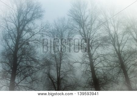 Misty Forest - trees in the mist