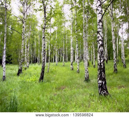 Scenic landscape - drawing oil birch grove in the spring