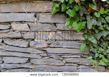 gray stone wall with creeping ivy on it