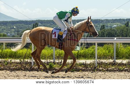 Horse race for the traditional prize Absenta in Pyatigorsk,the largest in Russia.