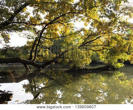 the branches of oak trees over the water