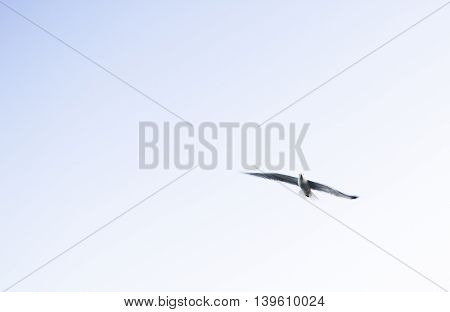 the bird flying lonely in the sky