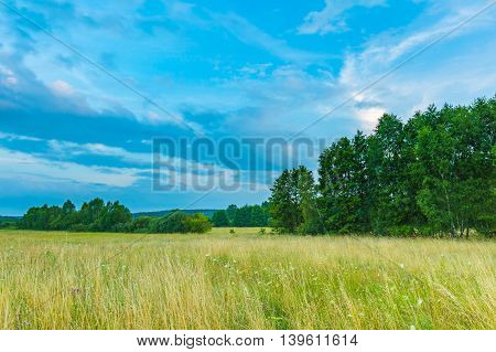 Wild Meadow At Evening Landscape.