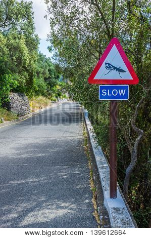 Road sign ordering slowing , Giblartar .