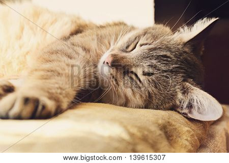 Beautiful domestic cat is sleeping on a windowstool outside close-up portrait