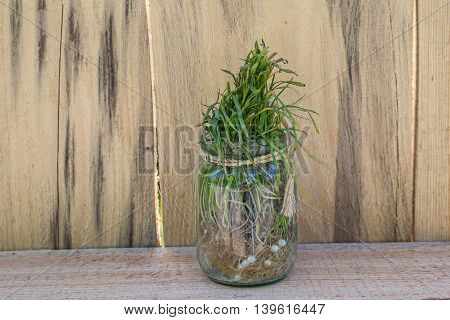 Sprouted grass in a glass jar. Decoration
