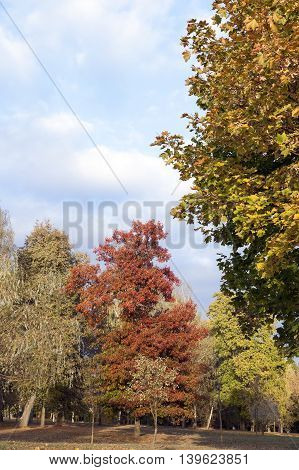 photographed close up foliage of yellow color on the trees, autumn season, a small depth of field