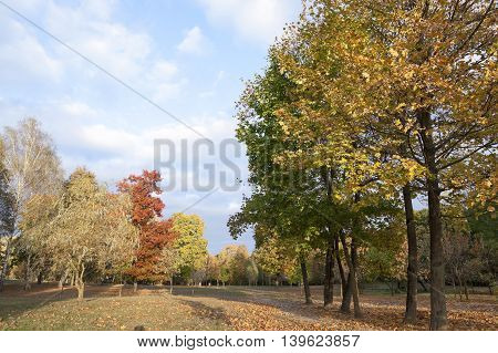 photographed trees and foliage in the autumn, the location - a park,
