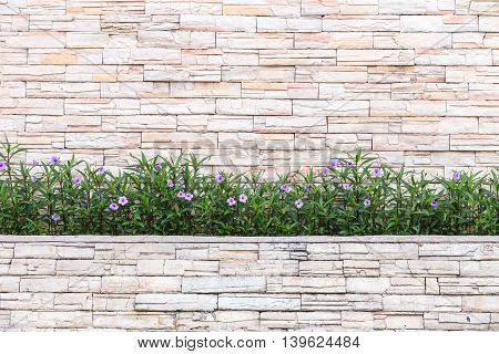 Pattern Of Natural Stone Wall And Flower Plant. Garden Decorative