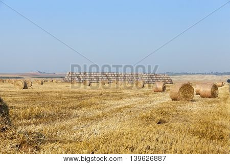 an agricultural field on which there are haystacks straw after harvesting wheat