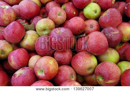 Crunchy reddish  apples in a mound awaiting market close-up