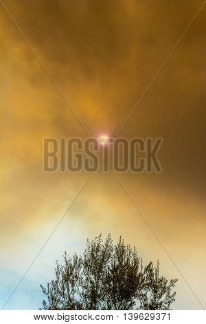 Sun Peeking Through Smoke Clouds Over Tree From Wildfire