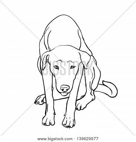 Drawing of sad stray dog sitting on white background
