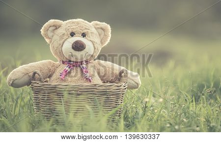 Lovely Brown Teddy Bear In Rattan Basket On Green Field With Lens Flare. Warm Toning Effect. Retro A