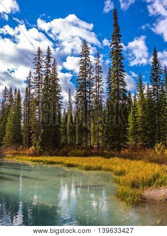 Coniferous forest on the shore of a mountain lake. Emerald Lake, Yoho National Park