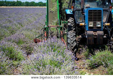 Tractor harvesting field of lavender. Warning label