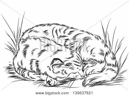Illustration to use on packages or bottles of products for cats. Illustration for decoration. It can be used as a banner or logo as well as in advertising or sales
