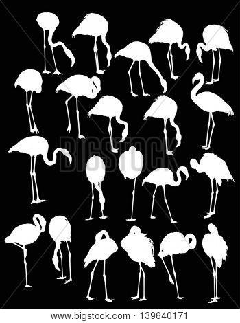 illustration with set of twenty one flamingo silhouettes isolated on black background