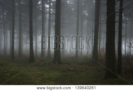 foggy forest on a cold autumn day