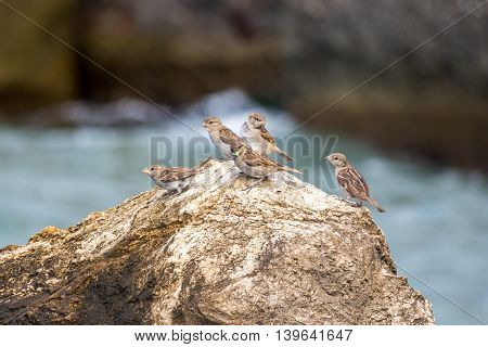 sparrows perched on a rock against blue sea.