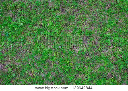 Green grass and ground background, top view