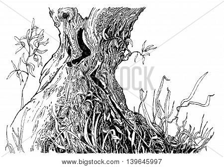 Hand-drawn sketch wit tree trunk and grass