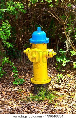 hydrant in the park in yellow and blue