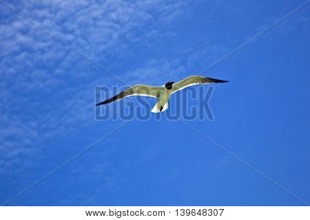 white seagull flies under the blue sky