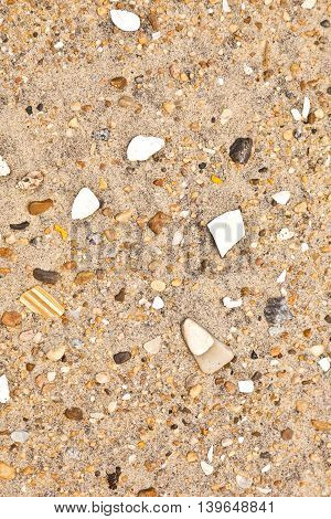 Shells And Stones At The  Beach