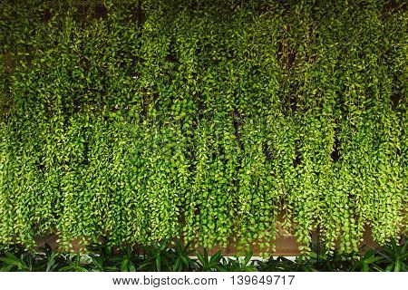 Green botany background. Great for your text.