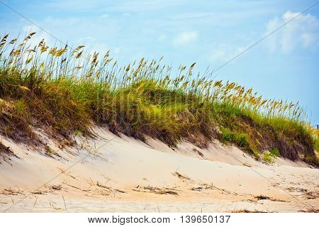 tall grass on a beach during stormy season