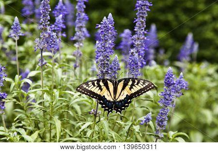 butterfly in the green nature summer garden