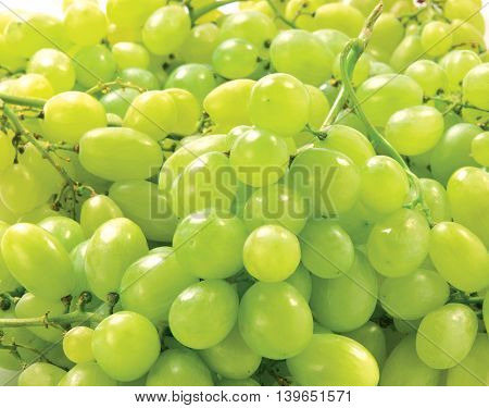 Green Grapes isolated on white background autumn sweet raw fruit