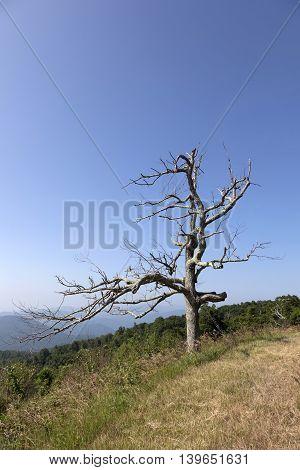 Beautiful View Of The Popular Blue Ridge  Mountain