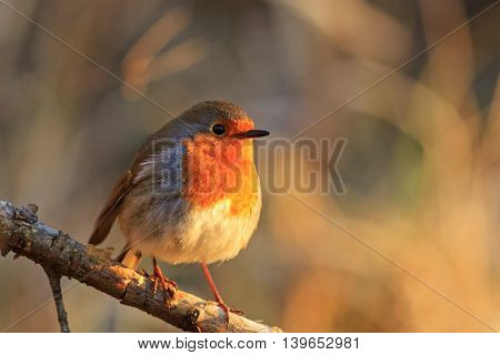 bird - a symbol of Christmas bird on a branch, sunny morning, bright colors