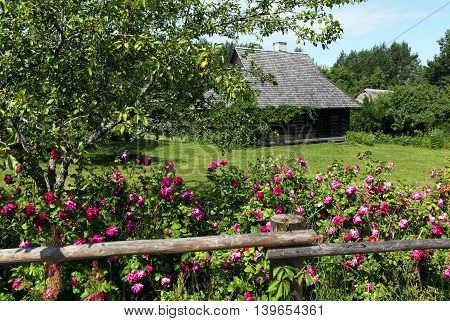 Rural landscape in the summer. The fence, roses, wooden house and lawn. Estonia.