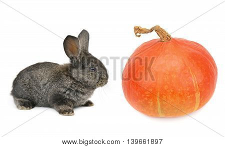 a rabbit and pumpkin isolated on white background
