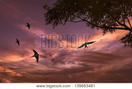 Free flying bird swallow on night sky background