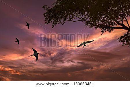 Free flying bird swallow on night sky background