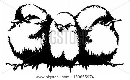 black and white paint draw Sparrow bird illustration