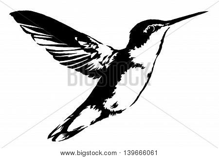 black and white paint draw hummingbird illustration