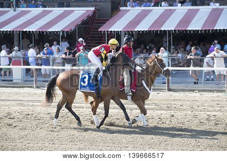 SARATOGA SPRINGS, NY - July 22: Lightening Dove in the Post Parade for the 98th runniing of the Schulerville Stakes for 2 year old Fillys on July 22 in Saratoga Springs, NY.