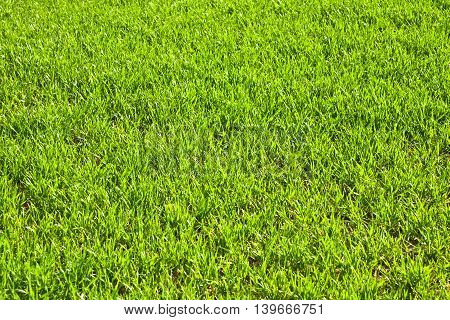 Green Field With Growing Plants