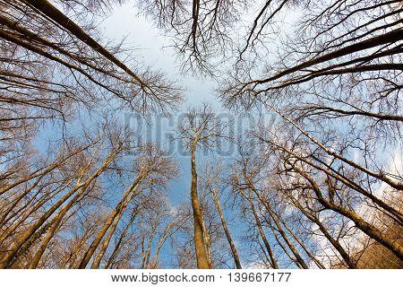 Spring Tree Crowns On Blue Sky